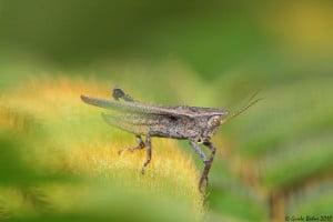 Grasshopper - Technology News - Israel