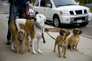 Technology News - Swifto: The Elite Dog-Walking Service That's Taking Manhattan By Storm
