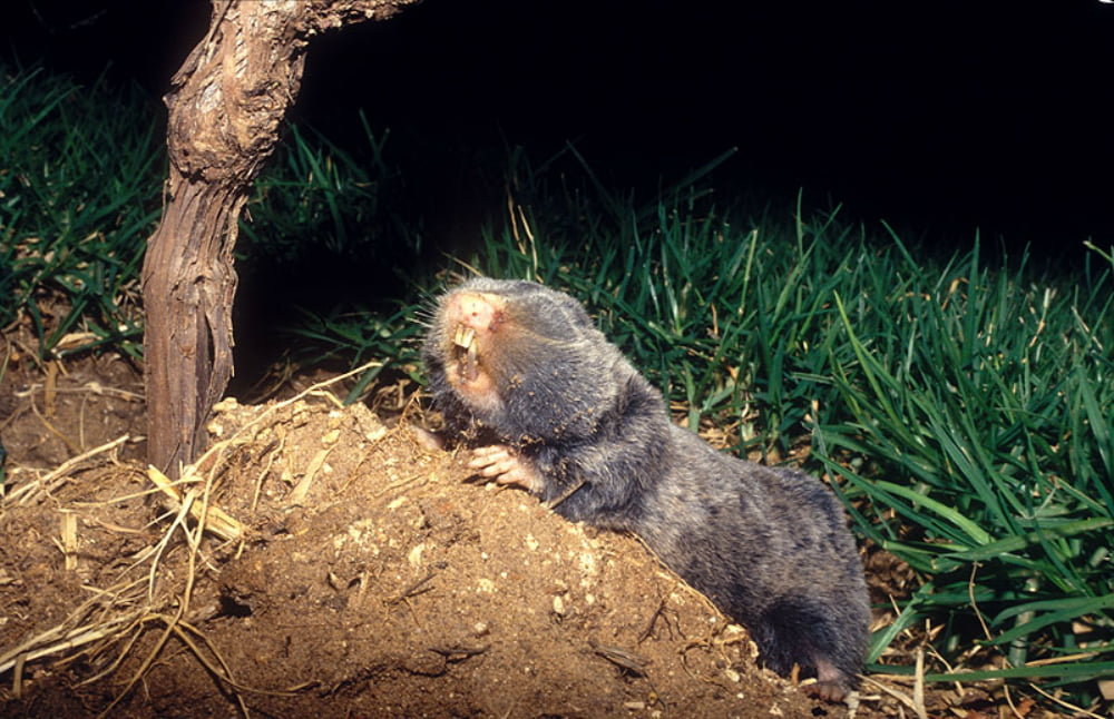 Health News: The Israeli Blind Mole Rat May Hold The Key To Curing Cancer