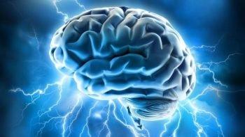 Brain, courtesy