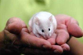 Mouse via Kim Carpenter/Flickr