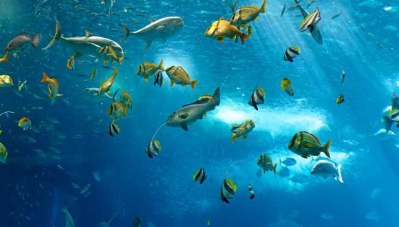 Fish at Sea via Pixabay