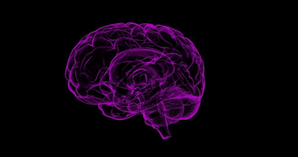 An illustrative image of a brain. Pixabay