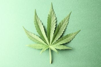 A cannabis leaf. Deposit Photos