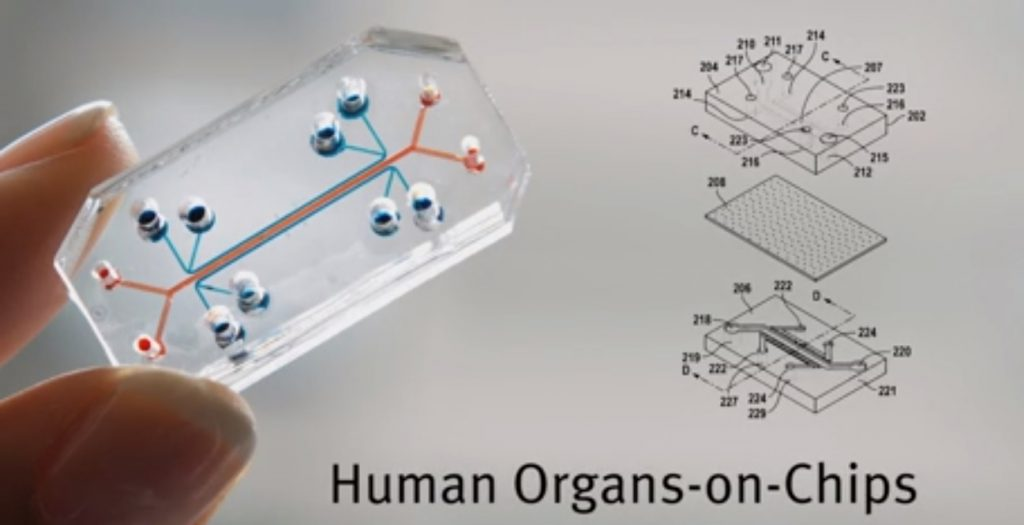 Human Organs on chips. Screenshot of a video by the Wyss Institute at Harvard University