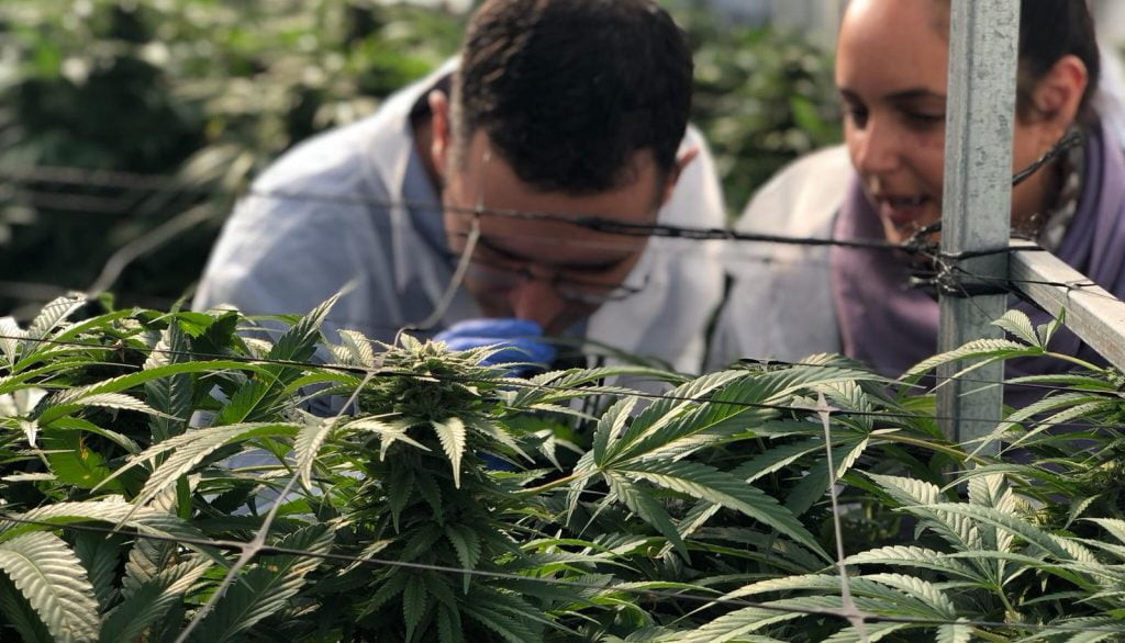 Health Ministry officials tour a cannabis farm in 2019. Photo by Eyal Basson/The Israeli Health Ministry