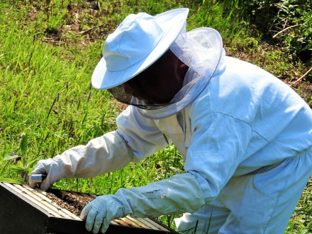 A beekeeper checks the hive. Pixabay