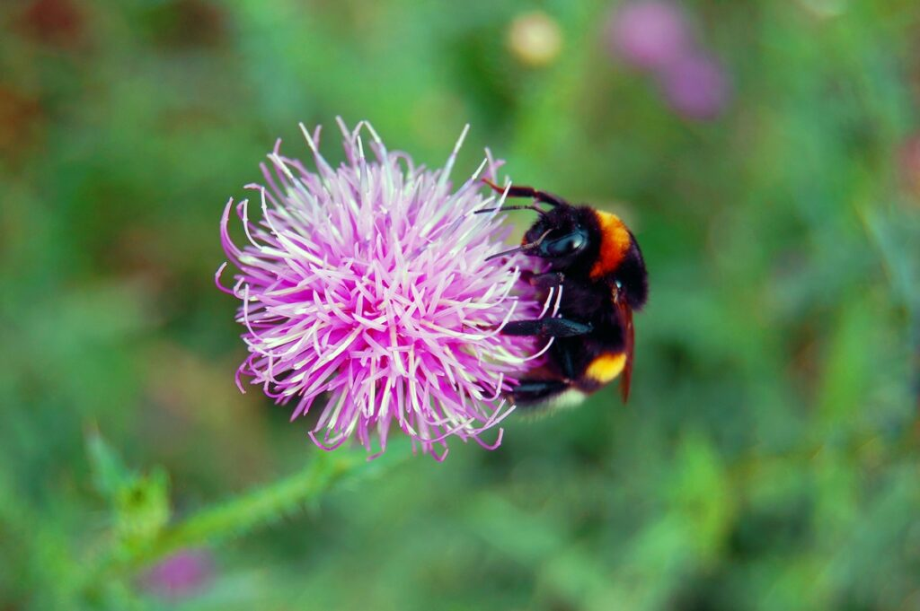 BioBee works with bumblebees for pollination rather than honey bees. Deposit Photos