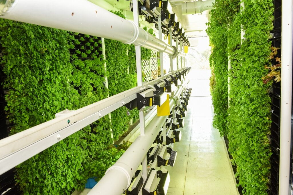 Vertical farms, like the ones created by Israel's Vertical Field, Courtesy