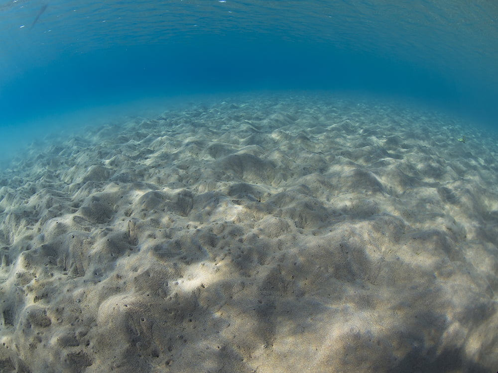 The sea floor a decade after commercial fish farms were removed. Photo: Dr. Shai Oron