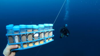 Sediment collection in the Gulf of Eilat. Photo: Dr. Shai Oron